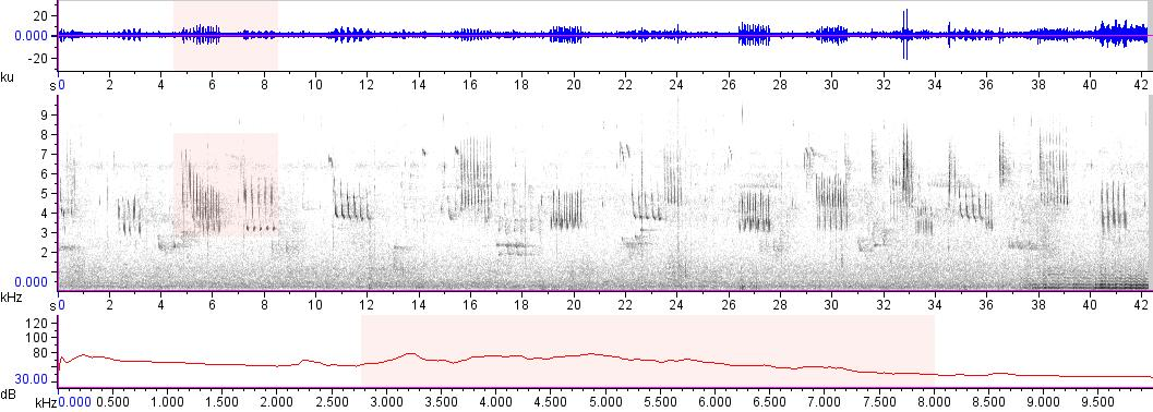 Sonogram of recording #AV 17245