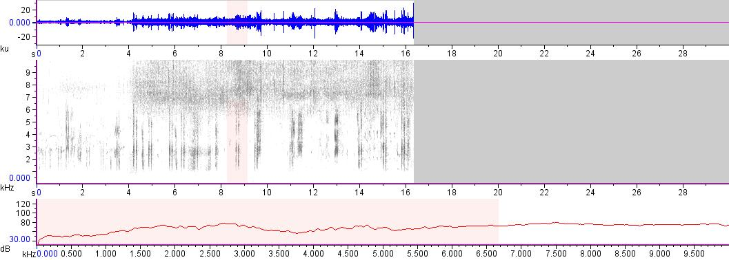 Sonogram of recording #AV 17277