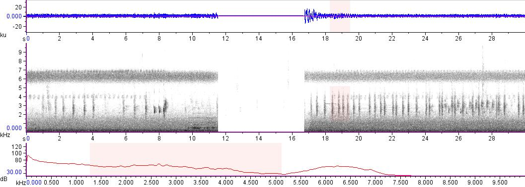 Sonogram of recording #AV 17289