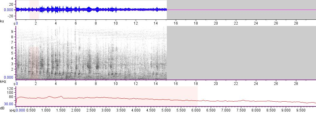 Sonogram of recording #AV 17313