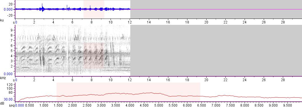 Sonogram of recording #AV 17315