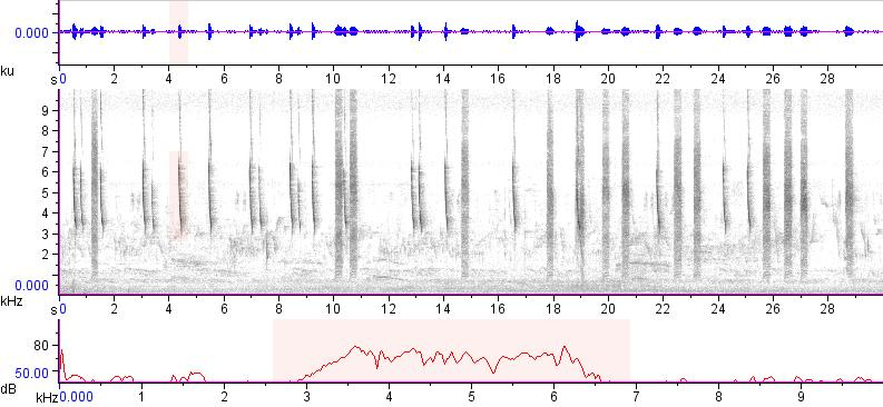 Sonogram of recording #AV 17335