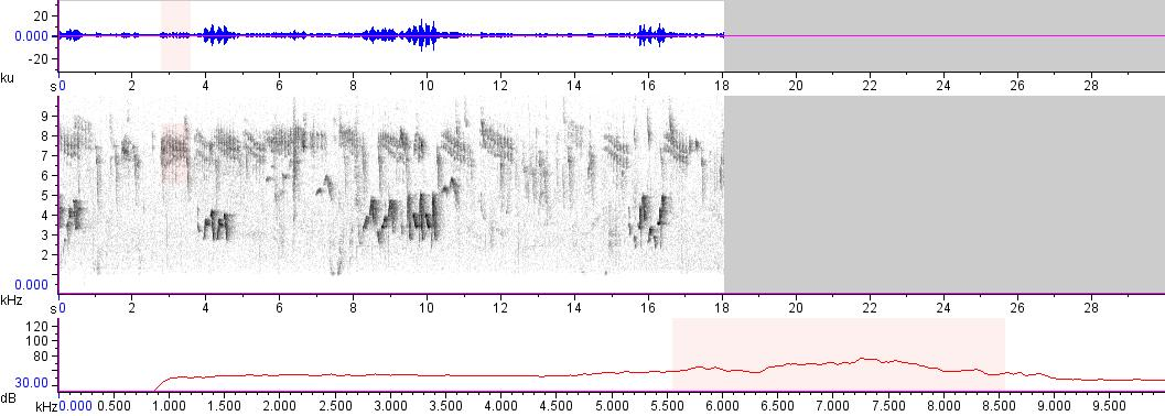 Sonogram of recording #AV 17391