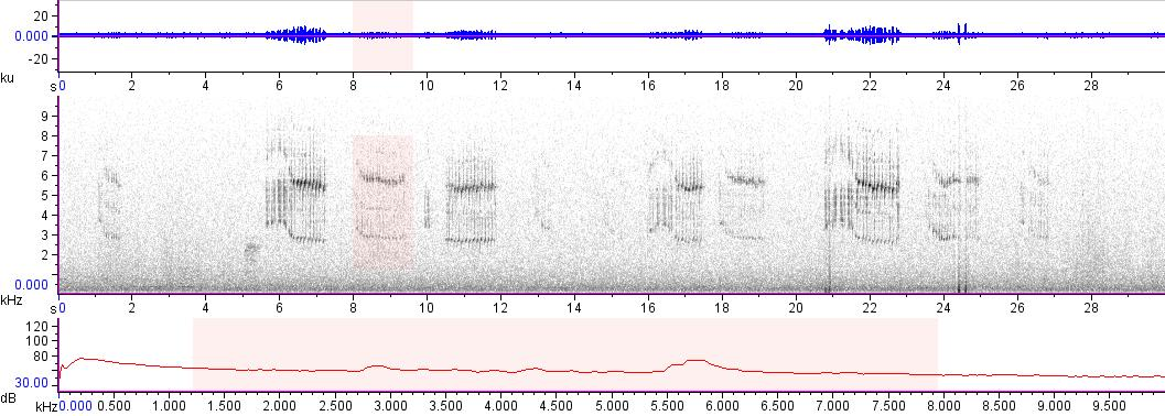 Sonogram of recording #AV 17412