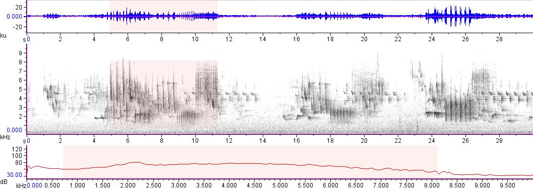 Sonogram of recording #AV 17420