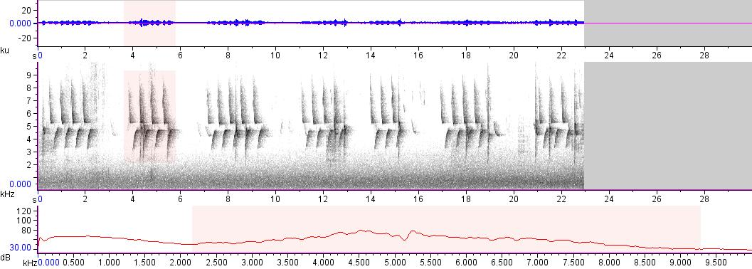 Sonogram of recording #AV 17440