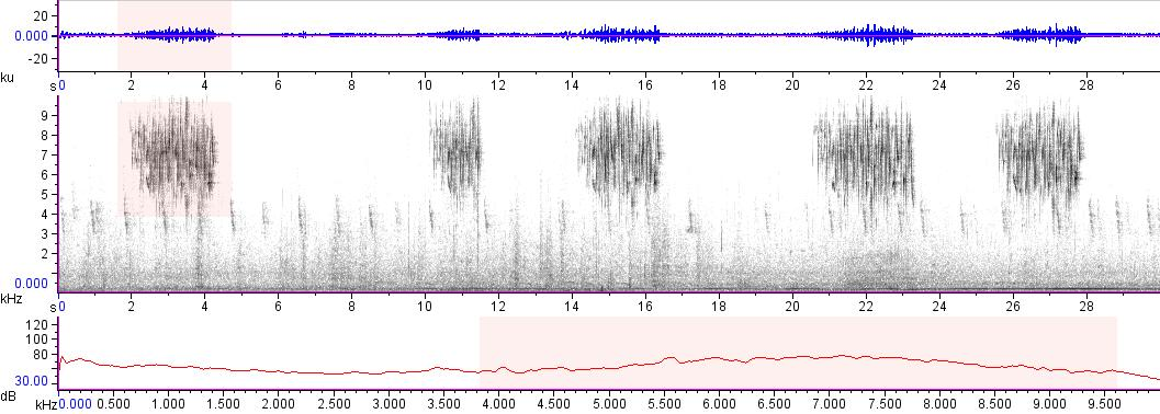 Sonogram of recording #AV 17454