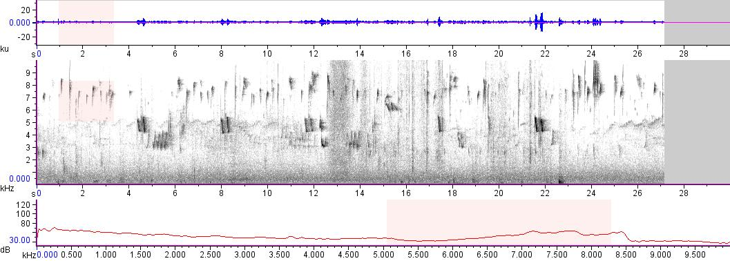 Sonogram of recording #AV 17462