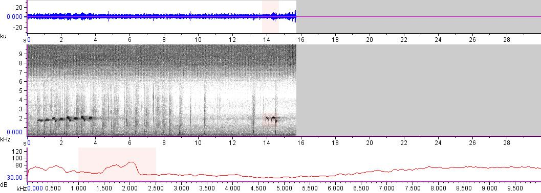 Sonogram of recording #AV 17489