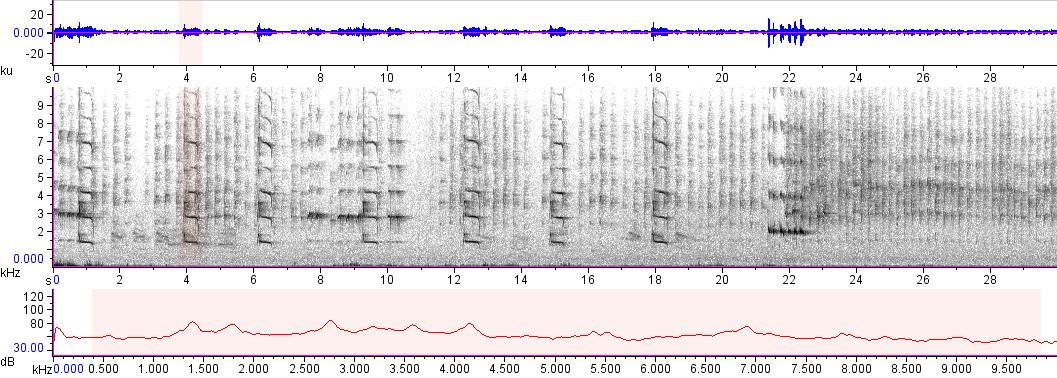 Sonogram of recording #AV 17493