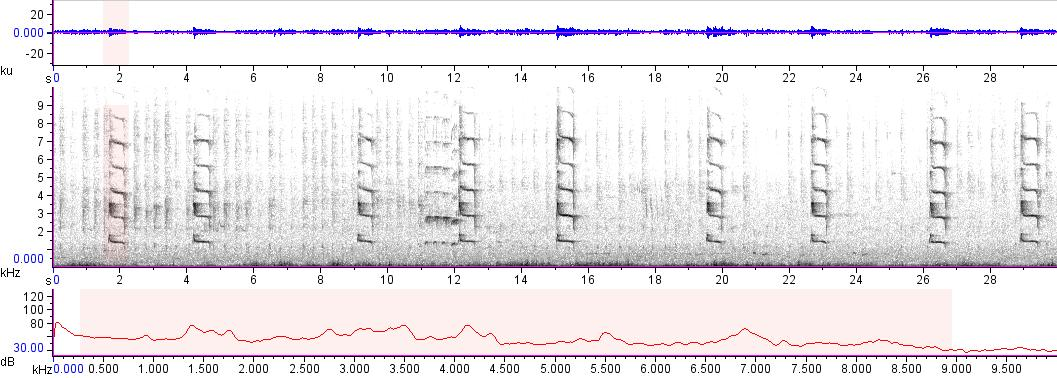 Sonogram of recording #AV 17494