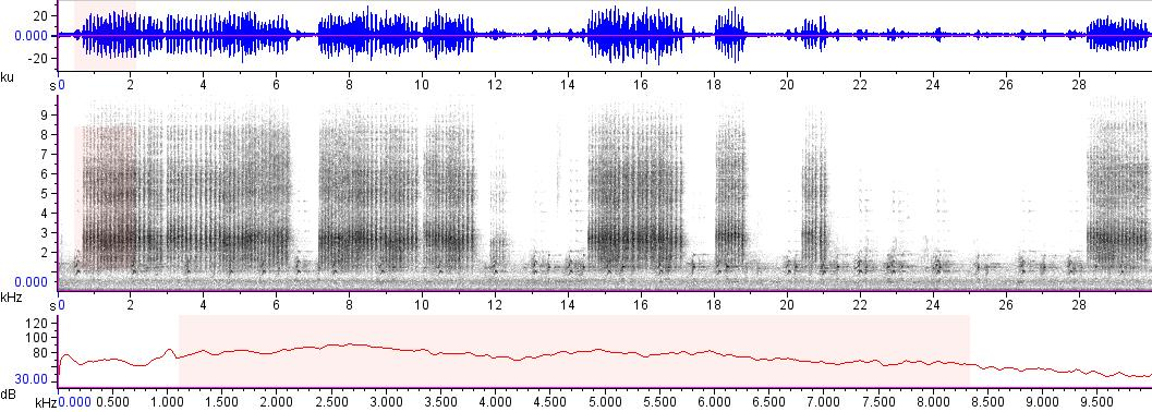 Sonogram of recording #AV 17501