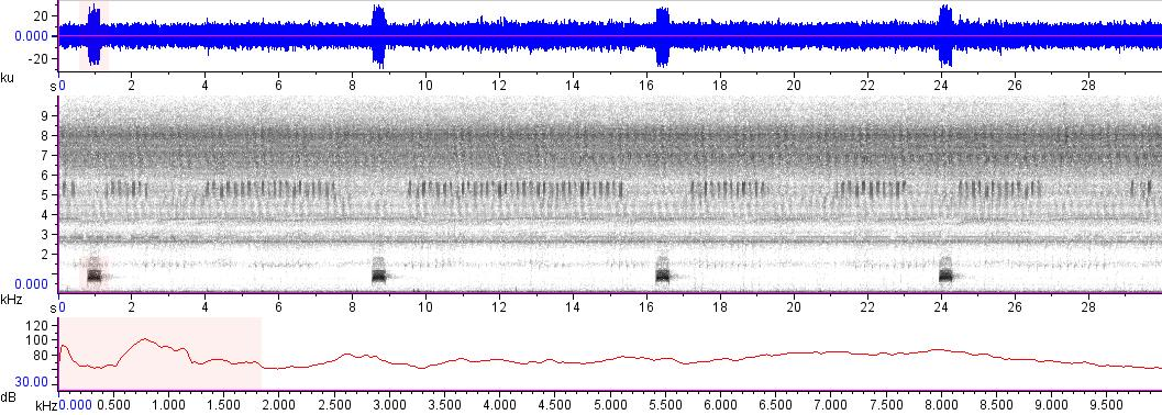 Sonogram of recording #AV 17517