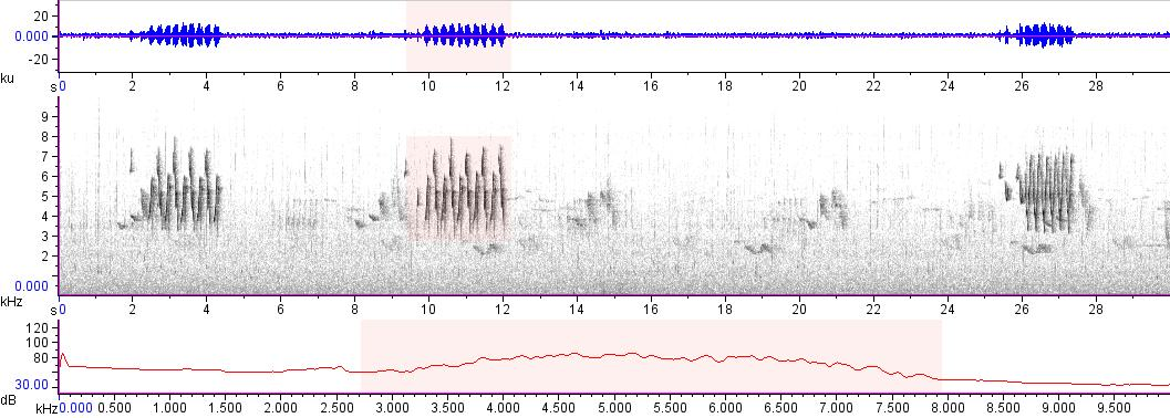 Sonogram of recording #AV 17528
