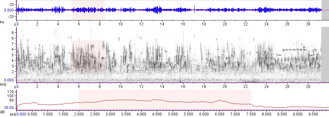 Sonogram of recording #AV 17544