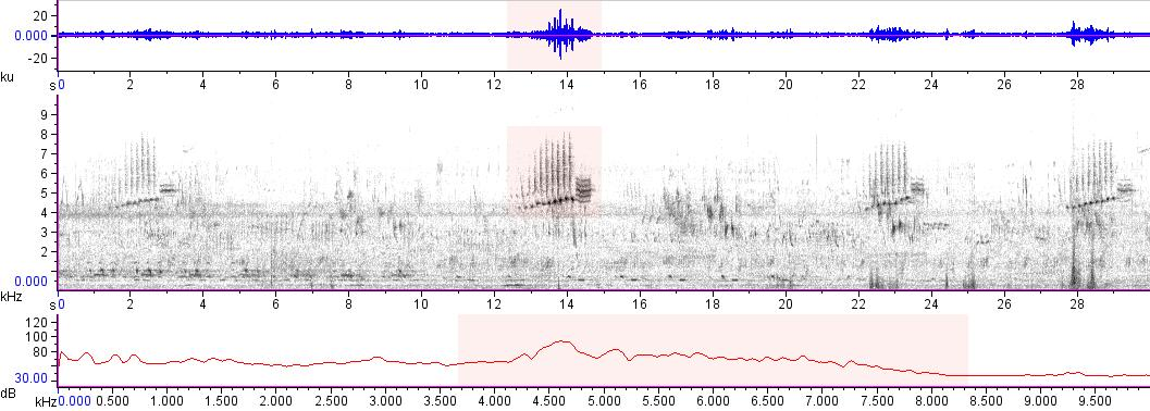 Sonogram of recording #AV 17566