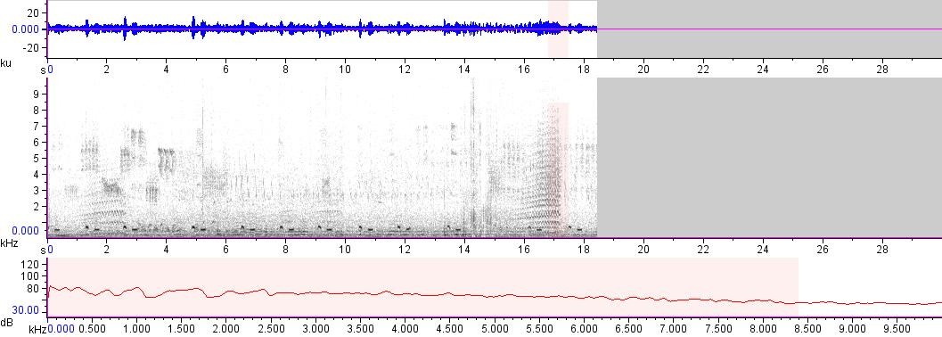 Sonogram of recording #AV 17584