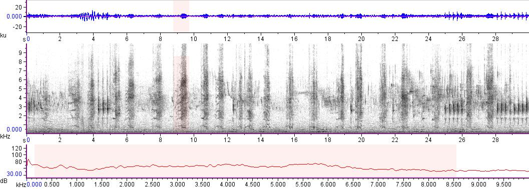Sonogram of recording #AV 17586