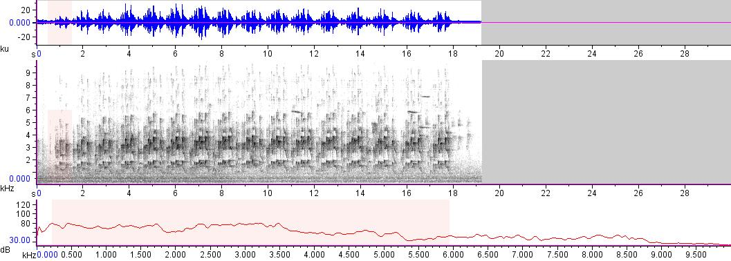 Sonogram of recording #AV 17623