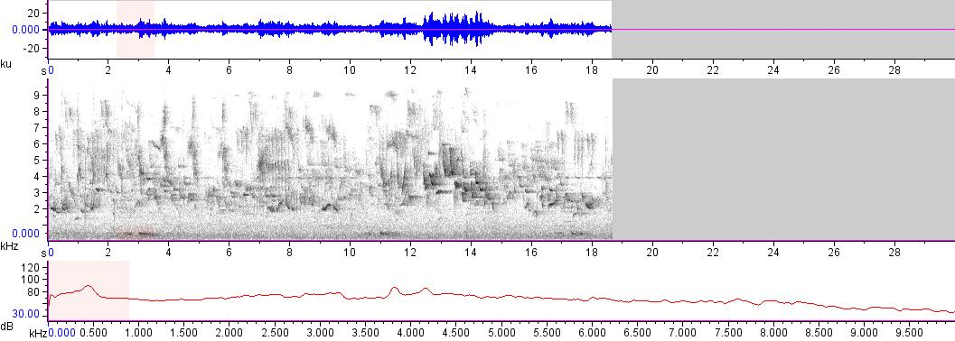 Sonogram of recording #AV 17655