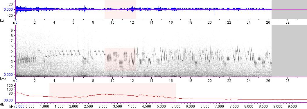 Sonogram of recording #AV 17664