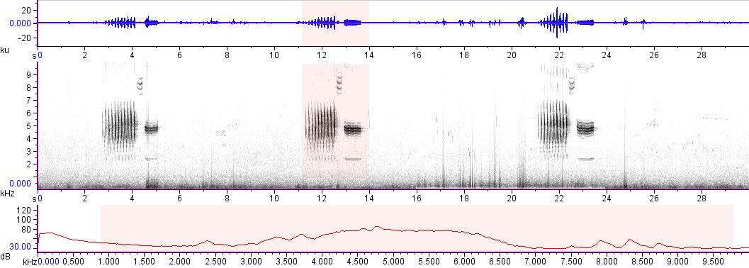 Sonogram of recording #AV 17669