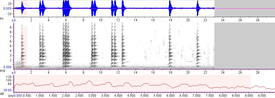 Sonogram of recording #AV 17722