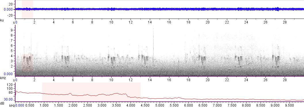 Sonogram of recording #AV 17784