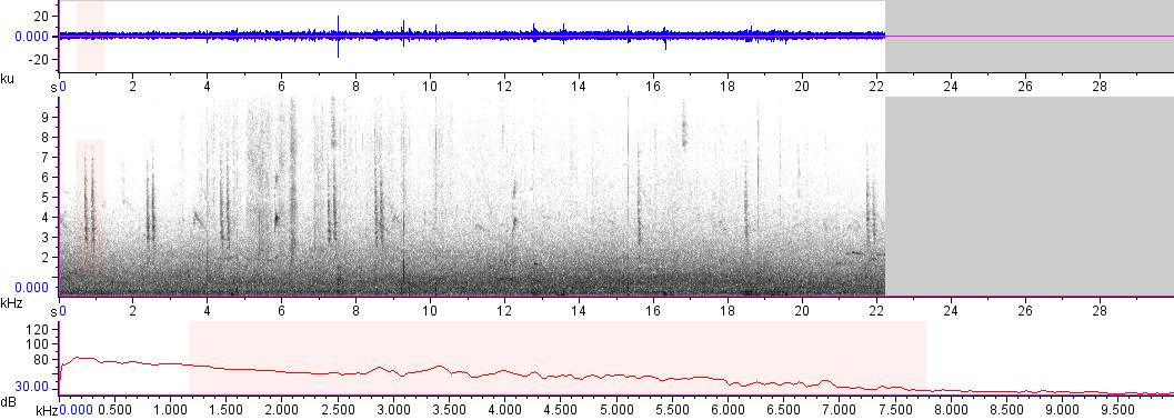 Sonogram of recording #AV 17816