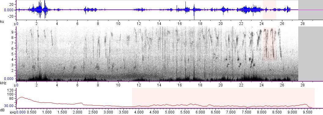 Sonogram of recording #AV 17836