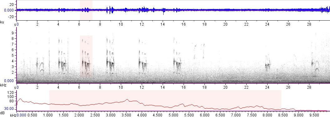Sonogram of recording #AV 17840