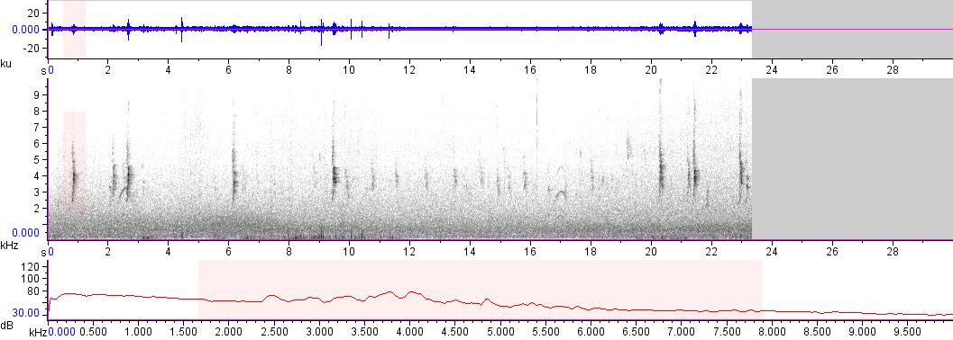 Sonogram of recording #AV 17846