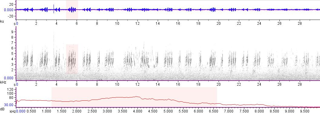 Sonogram of recording #AV 17892
