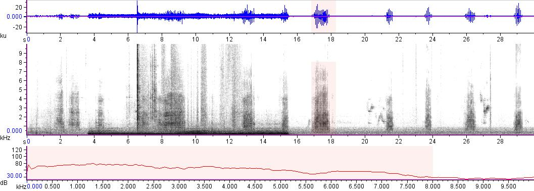 Sonogram of recording #AV 17911
