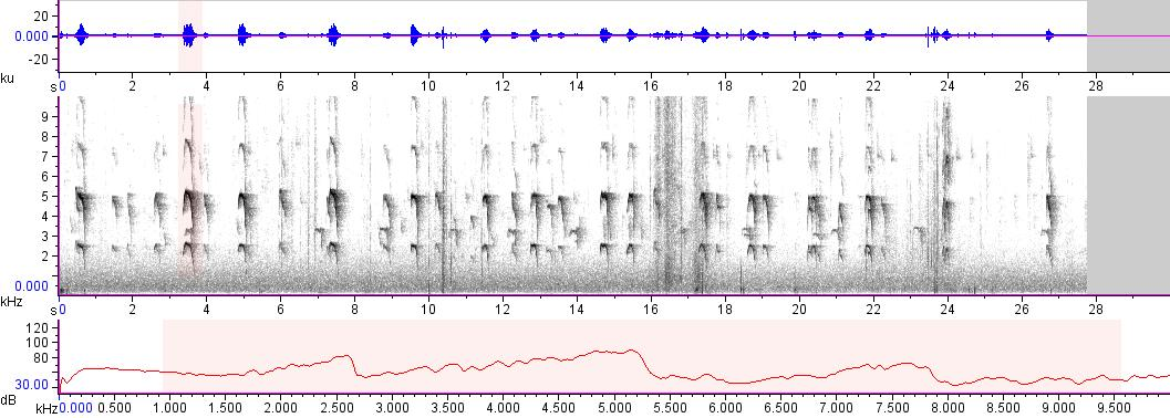 Sonogram of recording #AV 17957