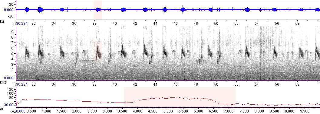 Sonogram of recording #AV 17959