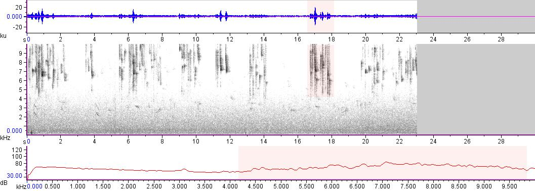 Sonogram of recording #AV 17974