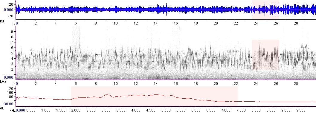 Sonogram of recording #AV 17985