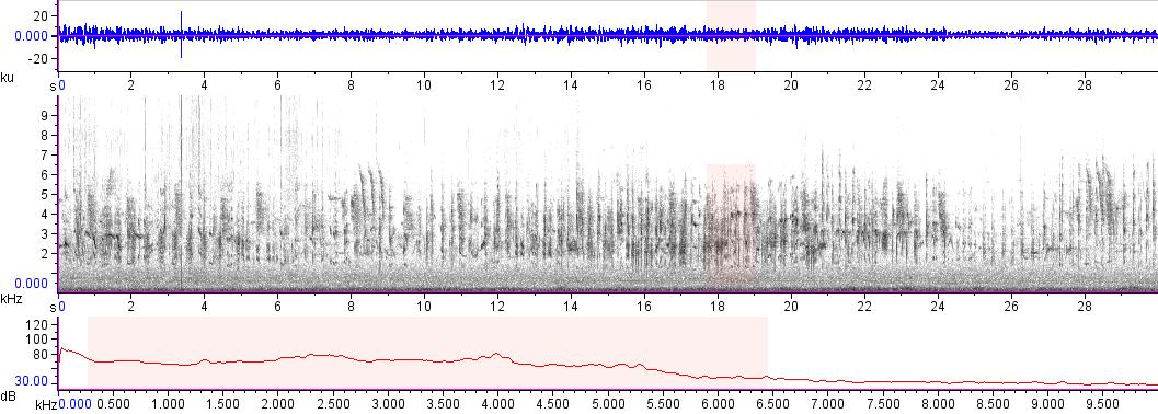 Sonogram of recording #AV 18004