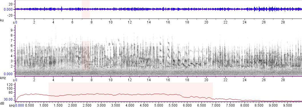 Sonogram of recording #AV 18005