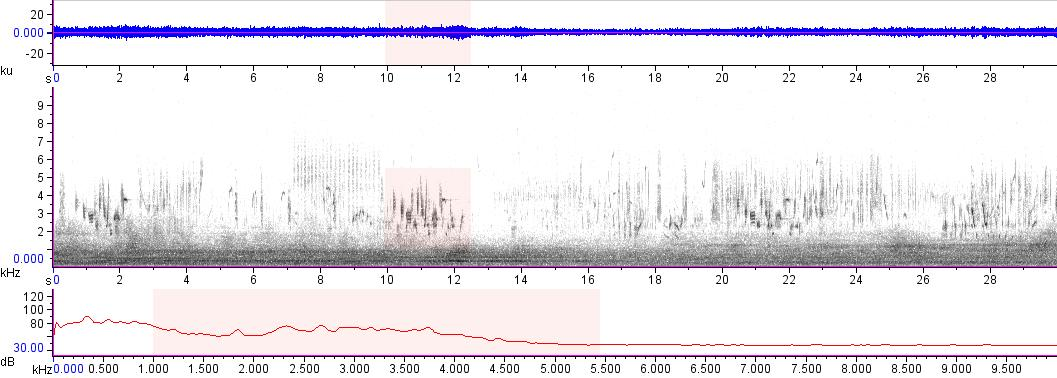 Sonogram of recording #AV 18013