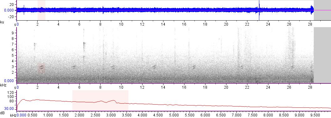 Sonogram of recording #AV 18035