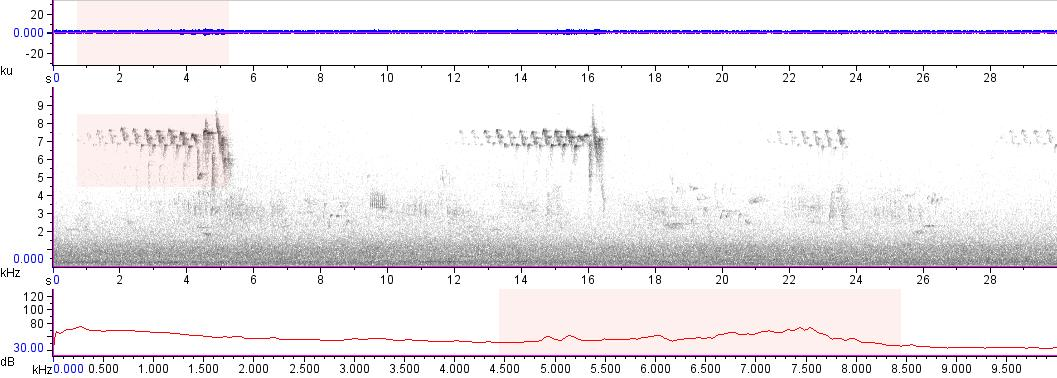 Sonogram of recording #AV 18060