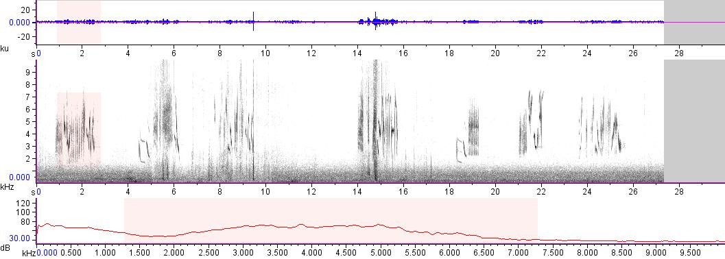 Sonogram of recording #AV 18090