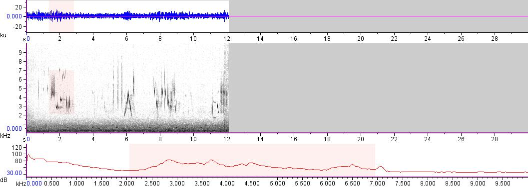Sonogram of recording #AV 18091