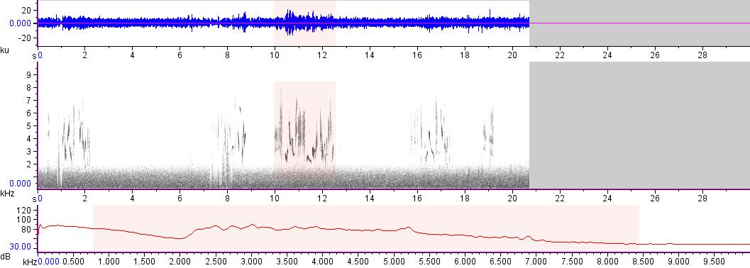 Sonogram of recording #AV 18093