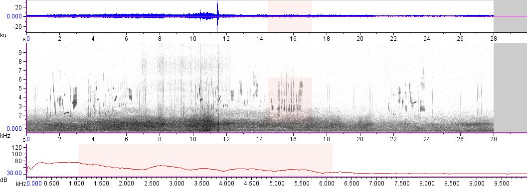 Sonogram of recording #AV 18103