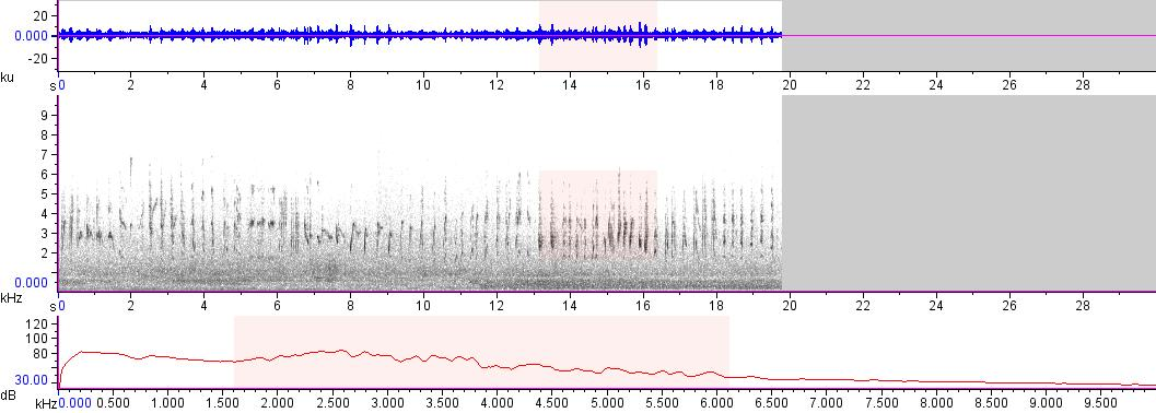Sonogram of recording #AV 18129