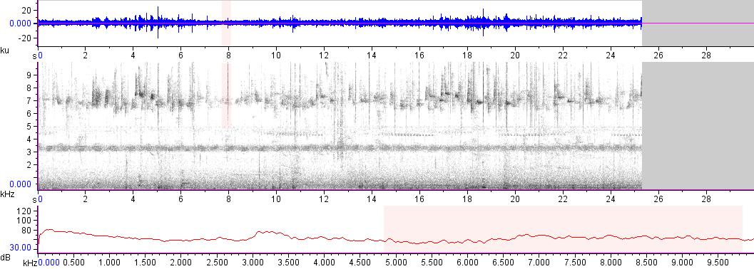 Sonogram of recording #AV 18144