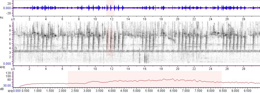 Sonogram of recording #AV 18145